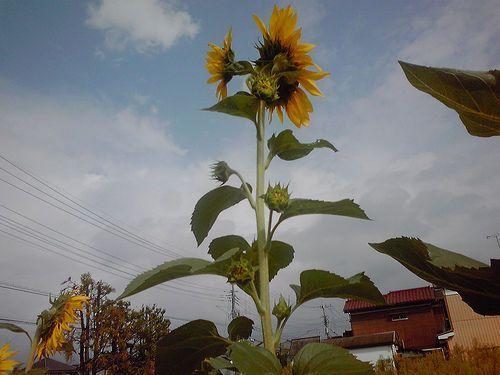 2012092410.jpg