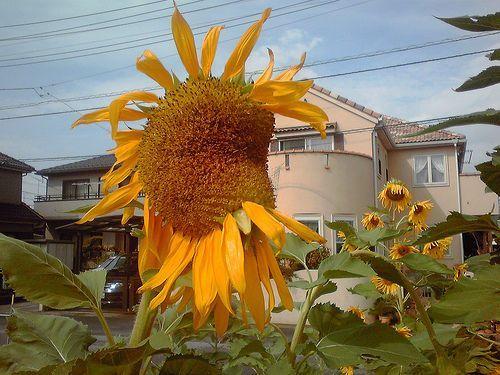 2012092412.jpg